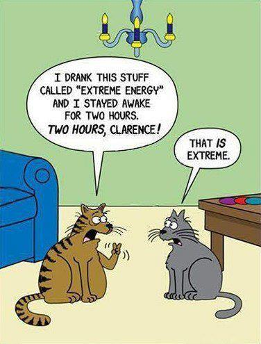 Extreme Energy Cats