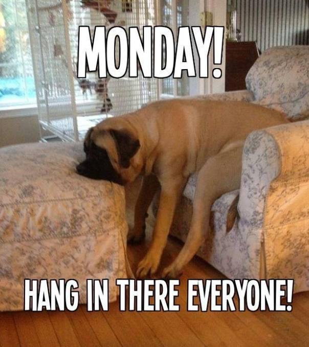 OMG it's Monday
